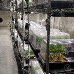 Plantas Juicy pequeñas